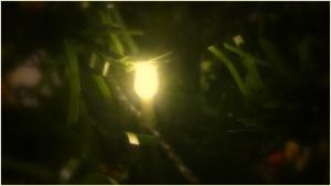 christmas-tree-light-2016-simon-peter-sutherland